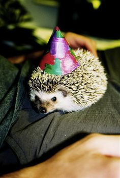 How To Dress A Hedgehog...some cute pictures in this article. :)