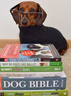 Private bookstore clerk! #dogs #pets #Dachshunds Facebook.com/sodoggonefynny