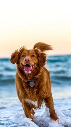 Environmental Film Festival, Cute Dogs Breeds, Funny Animal Videos, Virtual Tour, Dog Treats, Funny Dogs, Dog Lovers, Labrador Retriever, Digital Prints
