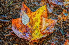 Leaves on the ground commercial use free picture 5327 | 1 million free pictures