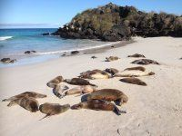 Galápagos Tours, Water, Outdoor, Gripe Water, Outdoors, Outdoor Living, Garden, Aqua