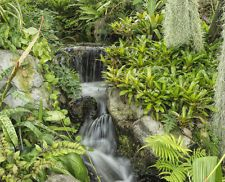 How To Make a Tropical Garden Anywhere