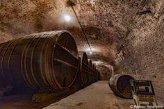 Tbilisi Wine Factory #1 Barrels