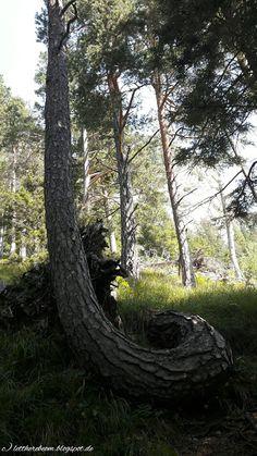 Ground Zero der Seele   Namaste! Hinfallen aufrappeln Krone richten und weitergehen - wenn das so einfach wäre. Dass Hinfallen jedenfalls nicht unbedingt das Ende sondern ein großer Anfang sein kann das erfuhr ich vor einem Jahr am eigenen Leib. Mehr als 365 Tage nach meinem D-Day - Zeit für einen sehr persönlichen Rückblick.  Das Ende für die Raupe war der Anfang für den Schmetterling.   Der Schmetterling lernt fliegen    Als ich diesen Baum auf einer Wanderung am Wilden Kaiser entdeckt…
