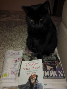 """A magazine and tabloid newspaper junkie cat who is trying to quit his habit and move onto books instead, but still needs magazines close to him """"just for comfort reasons""""."""