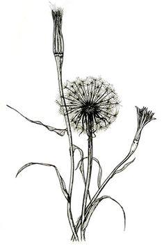 Image Missing: Botanical Illustration I - Pencil Techniques