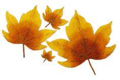Sisal-Ahornblätter, multicolor. 5-er Set. Als Ahornlaub gestaltet bilden diese Blätter aus Sisal in Herbstfarben eine strahlende Dekoration! ca. 10 bis 50 cm