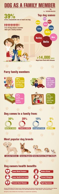 "DogHQ team just released ""Dog as a family member"" infographic. It contains interesting facts and stats including: how many dog owners consider their pet a family member top dog names where from dog comes to a family most popular dog breeds and many other interesting facts"