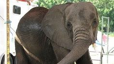 Sponsor USDA the white house: HELP NOSEY!!!!