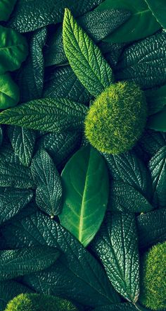 New wallpaper green plants Ideas Natur Wallpaper, Plant Wallpaper, Green Wallpaper, Trendy Wallpaper, New Wallpaper, Colorful Wallpaper, Flower Wallpaper, Wallpaper Backgrounds, Mobile Wallpaper