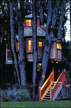 wow! best tree house I've ever seen