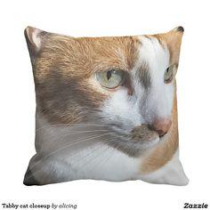 Tabby cat closeup