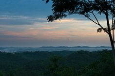 Sumatra, Indonesia. Photo by Gita Defoe for Photographers Without Borders. Sumatran Orangutan, Without Borders, Landscape Photos, Habitats, Photographers, Creatures, Sunset, Awesome, Outdoor