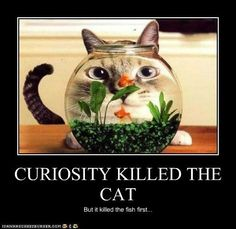 curiosity killed the cat but - Cerca con Google