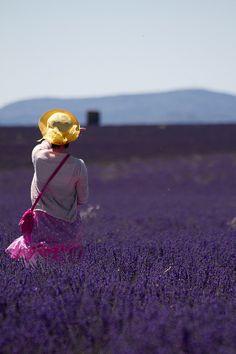 Through the lavender field