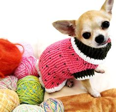 http://img.loveitsomuch.com  dog sweater
