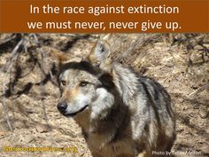 SAVE THE WOLVES, you and me our their only voice, let's make some noise!