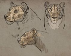 Animal sketches, animal drawings, art sketches, animal anatomy, human a Cat Anatomy, Anatomy Drawing, Animal Anatomy, Human Anatomy, Anatomy Male, Animal Sketches, Animal Drawings, Art Sketches, Art Journal Pages