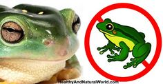 How to Get Rid of Frogs – The Best Natural Ways