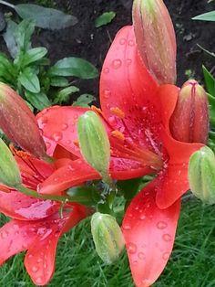 Colour so vivid! Watermelon, Stuffed Peppers, Colour, Fruit, Vegetables, Garden, Plants, Exotic Flowers, Color