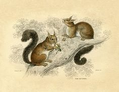 *The Graphics Fairy LLC*: Natural History Instant Art Printable - Squirrels - Fall