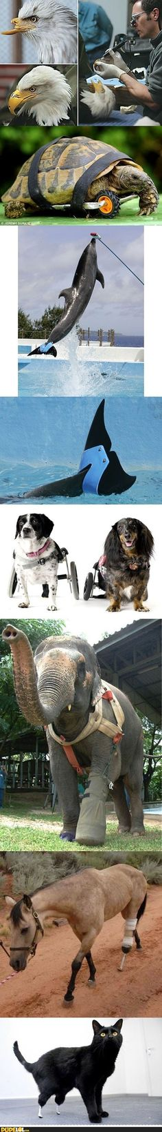 8 Cutest Animals That Live Strong and Happy Because There Were People Who Cared! Restore Faith in Humanity!