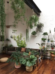 Plant-filled loft space