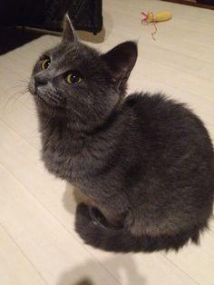 初めて投稿します☆5ヶ月位の子猫です