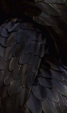 Feathers....