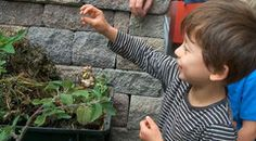 This video showcases a student-led lesson guided by the teacher's use of open-ended questions. Brian Silveira has his pre-K students work in the garden, where they hone their observation skills by looking closely at plants. When an apple falls down from a tree, Brian gathers the class together to observe the apple and reason about what would happen if the apple stayed on the tree longer. #ece #preK