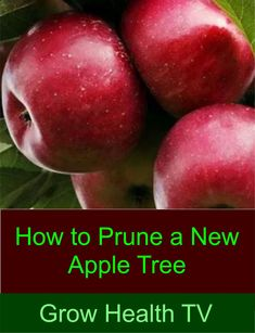 Great, easy to follow information about pruning container, or bare-root apple and other fruit trees from a grower with 28 years experience. Learn about fruit trees in your #garden or #backyardorchard. Whether open center or central leader method, this video and further information in the description will help you prune your fruit trees. #gardening #fruittree #pruning New Fruit, Apple Fruit, Pear Trees, Fruit Trees, Tree Pruning, Apple Tree, Backyard, Outdoor Spaces, Garden