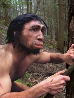 Homo erectus, first to use fire.