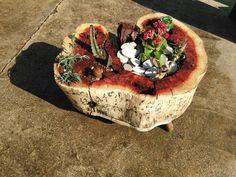 jardinera con cactus hecha con tronco de garrofera