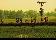 2207 INDONESIA JAVA