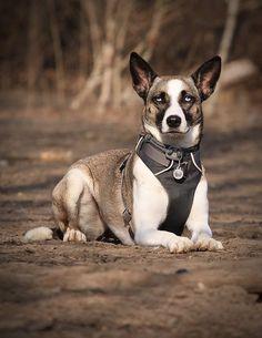Loomi Husky/Windhund | Pawshake