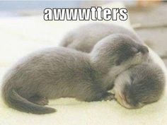 awwtters