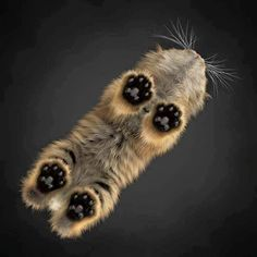 Look at those little #paws! #cute #adorable #pets