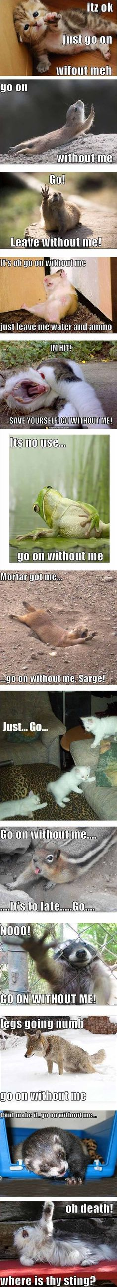 Attack Of The Funny Animals - 45 Pics