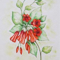 Australian native wild flower. Original art for sale. Pen, ink, watercolour on heavy weight German rag paper. Make an offer http://www.artinvesta.com/artwork/60. See more of Judy's work on her gallery page www.artinvesta.com/artist/36 - Australia, wildflowers, original art