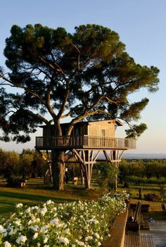 tree house casa sull'albero