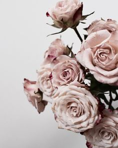 Spray Roses... I adore them As you know by now I absolutely love florals... This image is one of my favourite floral images I've taken…
