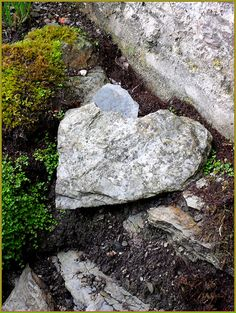 Heart Shaped Stone ♥