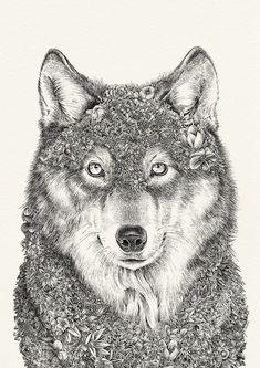 Marini Ferlazzo prints by Australian artist, Nathan Ferlazzo. Art for wildlife conservation. Animal Sketches, Animal Drawings, Art Drawings, Drawing Animals, World Animal Protection, Raven And Wolf, Bow Art, Pretty Animals, Wildlife Conservation
