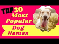Top 30 Most Popular Dog Names For Male And Female With Meaning 2021 ! Best Puppy Names - YouTube Popular Male Dog Names, Cute Male Dog Names, Police Dog Names, Best Puppy Names, Police Dogs, Pet Names, Aaron Kaufman, Celebrity Dogs, Names With Meaning