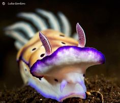 Nudibranch are such beautiful creatures. I got to see lots when snorkeling off of PNG.