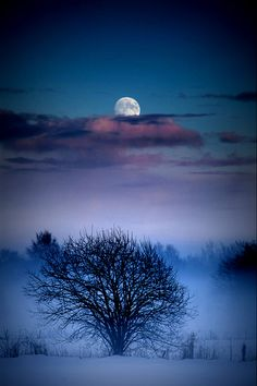 You have to be able to appreciate these things. How many people can say it was a full moon last night and appreciate it? ~Sandy Miller
