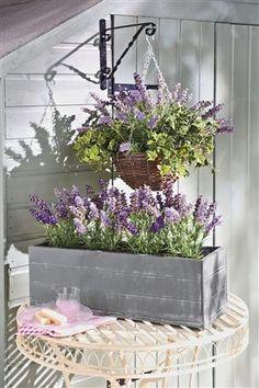 Lavender Trough