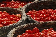 Dry farming tomatoes grown in Santorini