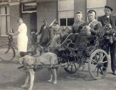 Twee vrouwen in een koetsje, getrokken door een hond. De foto is gemaakt in 1913, tijdens het bevrijdingsfeest in Metslawier. Het was honderd jaar geleden dat Napoleon was verslagen en de Fransen ons land verlieten. Door het hele land vonden dergelijke feesten plaats.