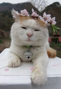 10 May 12.  flower kitty